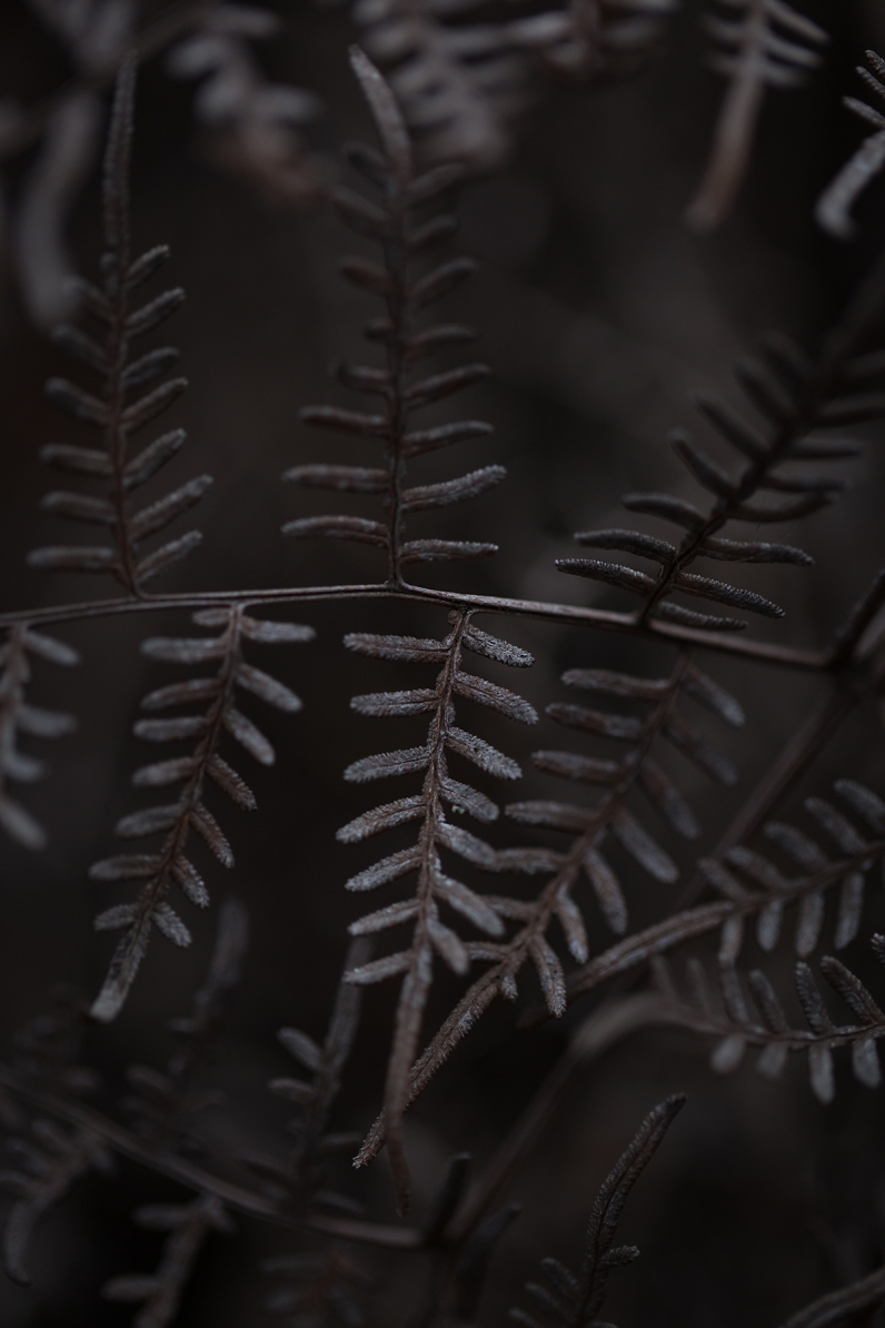 Winter-bracken-fern